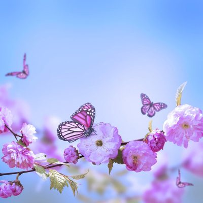 willows-support-group-butterflies
