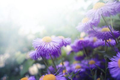 willows-support-group-flowers